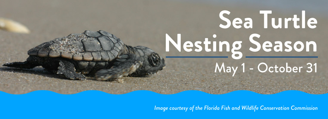 Sea Turtle Nesting Season is May 1 - October 31